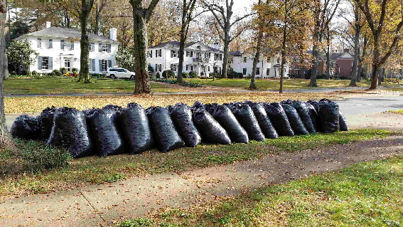 63 wio reduced leaf bags on Queens Road West Dec 5,17