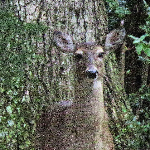 deer closeup 1436_4887