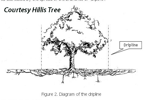 tree drip zone Hillis diagram_edited-1